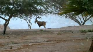 הצימרים של מרגו בשדה בוקר - צימרים בנגב   WWW.ZIMMER.CO.IL
