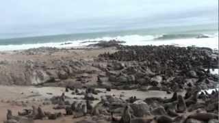 טיול ג'יפים בנמיביה, איילה גיאוגרפית