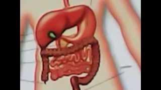 הסבר קצרצר על מערכת העיכול