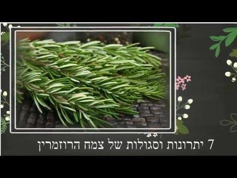 אלטרנטיבלי - 7 יתרונות וסגולות של צמח הרוזמרין
