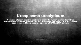 Medical Vocabulary: What Does Ureaplasma Urealyticum Mean  אוראפלסמה אוריאליטיקום