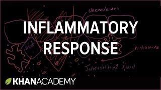 Inflammatory Response דלקת