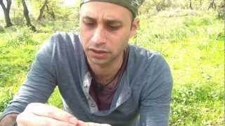 צמחי בר לליקוט ומאכל
