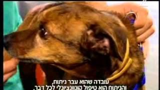 רפואה משלימה לבעלי חיים - מנחם הורוביץ בא לביקור