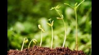 צמחי מרפא לטיפול תומך בסרטן