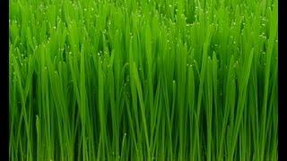 Wheat Grass Soap Making                     הכנת וחיתוך סבון עשב חיטה