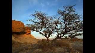 צימר החאן  - צימרים בחצבה שבערבה  - צימרים בדרום | Www.zimmer.co.il
