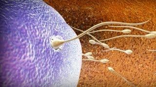 תחילת ההריון (הפריה)