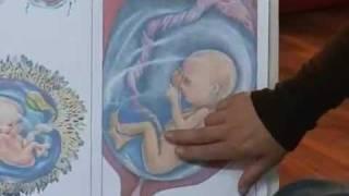 קורס הכנה ללידה - מבנה הרחם