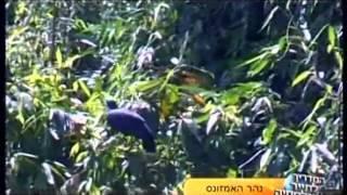 טיול מאורגן לאמזונס - פגסוס ישראל
