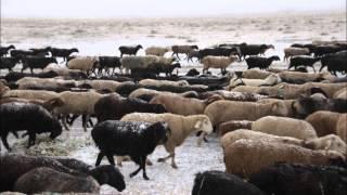 טיול ג'יפים בקירגיסטן עם איילה גיאוגרפית צילום: אורלי משה